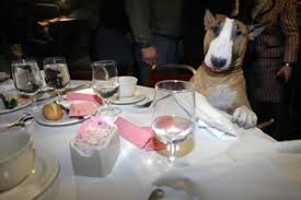 dog at table