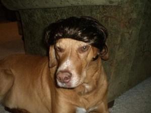 dog toupee best